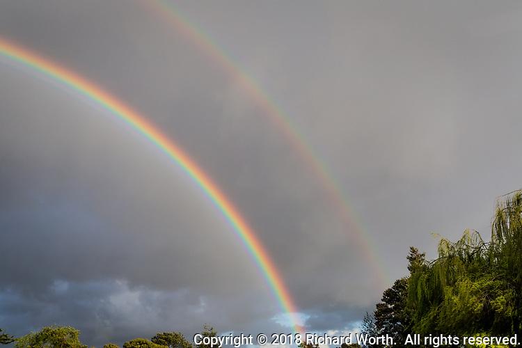 The arc of a double-rainbow dives into the treetops at a neighborhood park along San Francisco Bay.