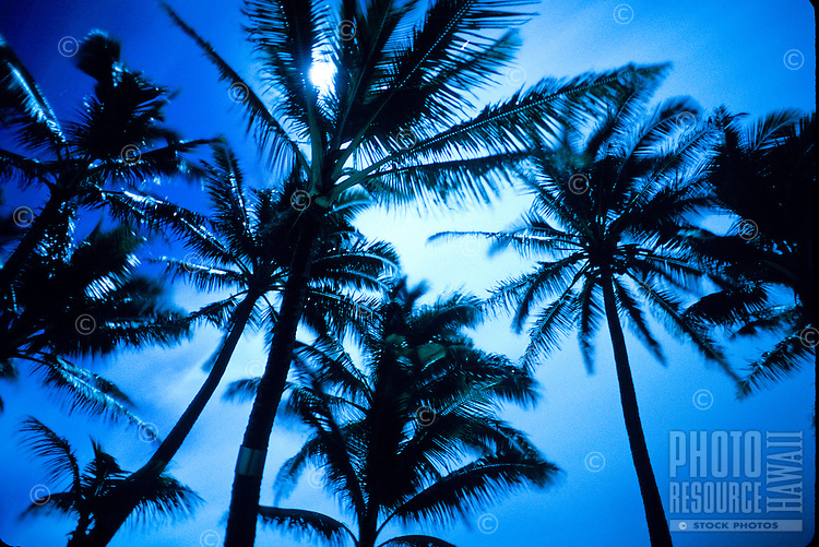 Silhouetted shot of palm trees from the ground looking up