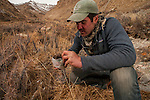 Snow Leopard (Panthera uncia) biologist, Shannon Kachel, collecting scat, Sarychat-Ertash Strict Nature Reserve, Tien Shan Mountains, eastern Kyrgyzstan