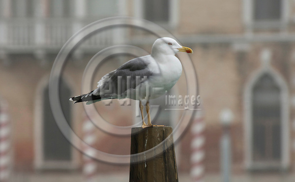 Venice-Italy - January 09, 2011 -- Morning mist at Grand Canal / Canal Grande, seagull on a pole -- Photo: Horst Wagner / eup-images