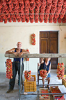 Farmer Ponsiello Giovanni and his wife Maria Aprea preparing pomodorino piennolo del Vesuvio for the winter season in their home