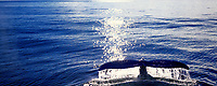 Humpback whale sounding, Prince William Sound, Alaska