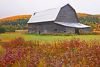 Barn, farmland and Acadian forest in autumn foliage. Near Edmunston. Madawaska County, Rolling hills. <br />