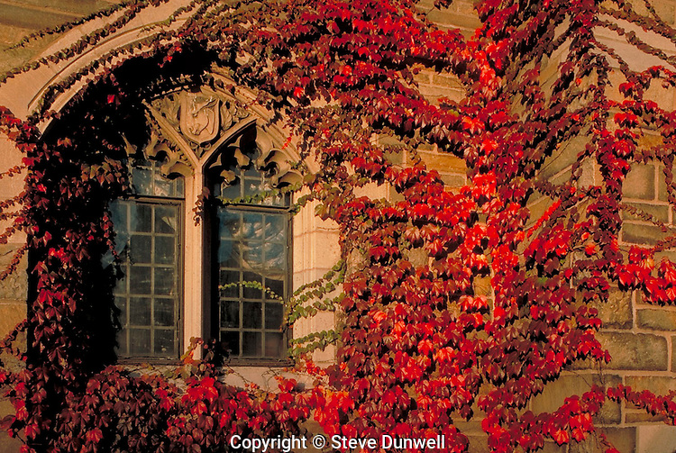 ivy on Trumbull College, Yale University, New Haven, CT