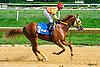 winning at Delaware Park on 8/4/16