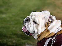 MSU Football vs. Vanderbilt - Game Day - Champ on sideline.<br /> (photo by Megan Bean / &copy; Mississippi State University)