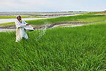 A farmer fertilizes his rice in Kunderpara, a village on an island in the Brahmaputra River in northern Bangladesh.