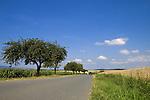 Europa, DEU, Deutschland, Rheinland Pfalz, Mittelrhein, Loreley, Reitzenhain, Agrarlandschaft, Sommer, Getreide, Anbau, Feld, Acker, Weg, Strasse, Baeume, Apfelbaeume, Kategorien und Themen, Agrar, Agrarwirtschaft, Landwirtschaft, Landwirtschaftlich, Natur, Naturfoto, Naturfotos, Naturfotografie, Naturphoto, Naturphotographie, Landschaft, Landschaften, Landschaftsfoto, Landschaftsfotografie, Landschaftsphoto, Landschaftsphotographie......[Fuer die Nutzung gelten die jeweils gueltigen Allgemeinen Liefer-und Geschaeftsbedingungen. Nutzung nur gegen Verwendungsmeldung und Nachweis. Download der AGB unter http://www.image-box.com oder werden auf Anfrage zugesendet. Freigabe ist vorher erforderlich. Jede Nutzung des Fotos ist honorarpflichtig gemaess derzeit gueltiger MFM Liste - Kontakt, Uwe Schmid-Fotografie, Duisburg, Tel. (+49).2065.677997, ..archiv@image-box.com, www.image-box.com]