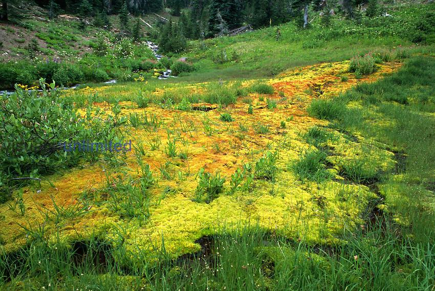 Subalpine Mosses, Bird Creek Meadows, Washington, USA