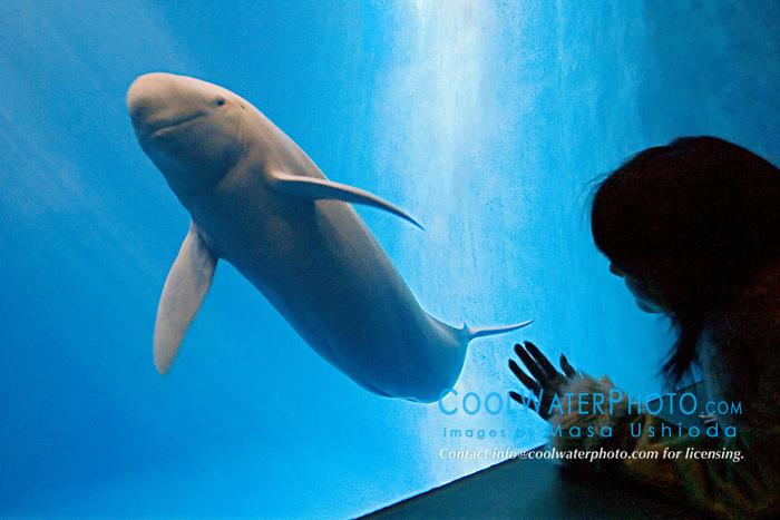 aquarium visitor observing finless porpoise, Neophocaena phocaenoides (c), Info-Pacific Ocean