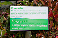 Frog pond in the garden at Hotel Bougainvillea, San Jose, Costa Rica.  Three ponds in the hotel gardens were built especially as breeding habitat for the endangered blue-sided treefrog or coffee frog, Agalychnis annae.  They are also home to a population of Forreri leopard frogs, Rana forreri.