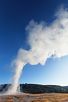 Early morning Old Faithful geyser eruption, Yellowstone National Park, Wyoming, USA