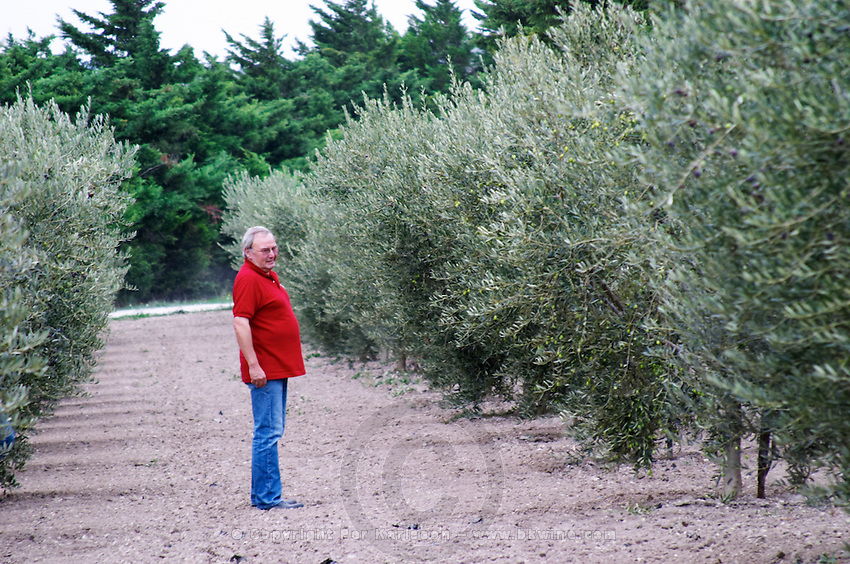 The owner manager Rene Ouenin walking in the plantation between olive trees. Moulin Mas des Barres olive mill, Maussanes les Alpilles, Bouches du Rhone, Provence, France, Europe