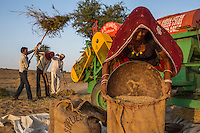 Guar farmers Birbal Ram, 38, his wife Kelavati Devi, 38, and their extended family thresh their harvested guar in their shared field in Rajera village, Bikaner, Rajasthan, India on October 23, 2016. Non-profit organisation Technoserve works with farmers in Bikaner, providing technical support and training, causing increased yield from implementation of good agricultural practices as well as a switch to using better grains better suited to the given climate. Photograph by Suzanne Lee