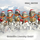 CHIARA,CHRISTMAS ANIMALS, WEIHNACHTEN TIERE, NAVIDAD ANIMALES, paintings+++++,USLGCHI558,#XA# ,funny ,funny