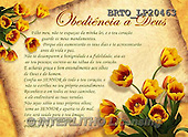Alfredo, FLOWERS, BLUMEN, FLORES, paintings+++++,BRTOLP20463,#F# ,parchment,