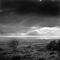 The Quantocks, Somerset, England, UK