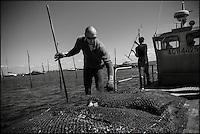 France, Gironde (33), Bassin d'Arcachon, Lège-Cap Ferret , Village de Lherbe: Ostréiculteurs , Eric Dauges ostreiculteur au travail // France, Gironde, Bassin d'Arcachon, Lège-Cap Ferret Lherbe Village: Eric Dauges oyster work