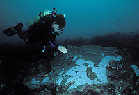 A diver inspects a bleached coral head caused by polluted runoff. Off the coast of Vera Cruz Mexico.