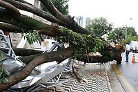 16.02.2019 - Queda de árvore em São Caetano