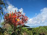 Palau, Micronesia -- Blooming flower.