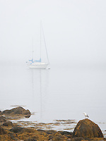 Early morning fog lifting in Gloucester Ma. A boat, a bird and the morning fog combining in a visual poem.<br />