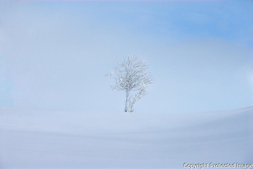 A single tree alone in the Norwegian winter landscape