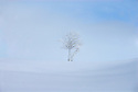 A single tree alone in the Norwegian winter landscape