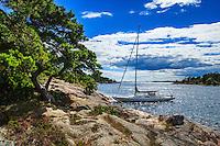 Tall på klippa med en förtöjd segelbåt och solreflexer i Stockholms skärgård.