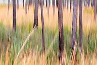 The Mississippi Sandhill Crane National Wildlife Refuge contains grass lands for this endangered species.