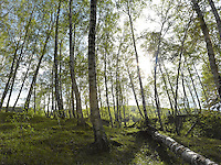 FOREST_LOCATION_90032