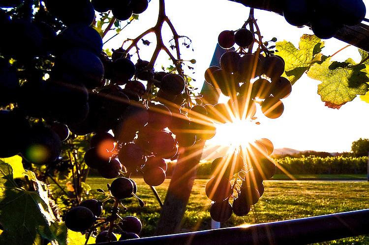 Sunrise at Anyela's Vineyards in Skaneateles, NY.