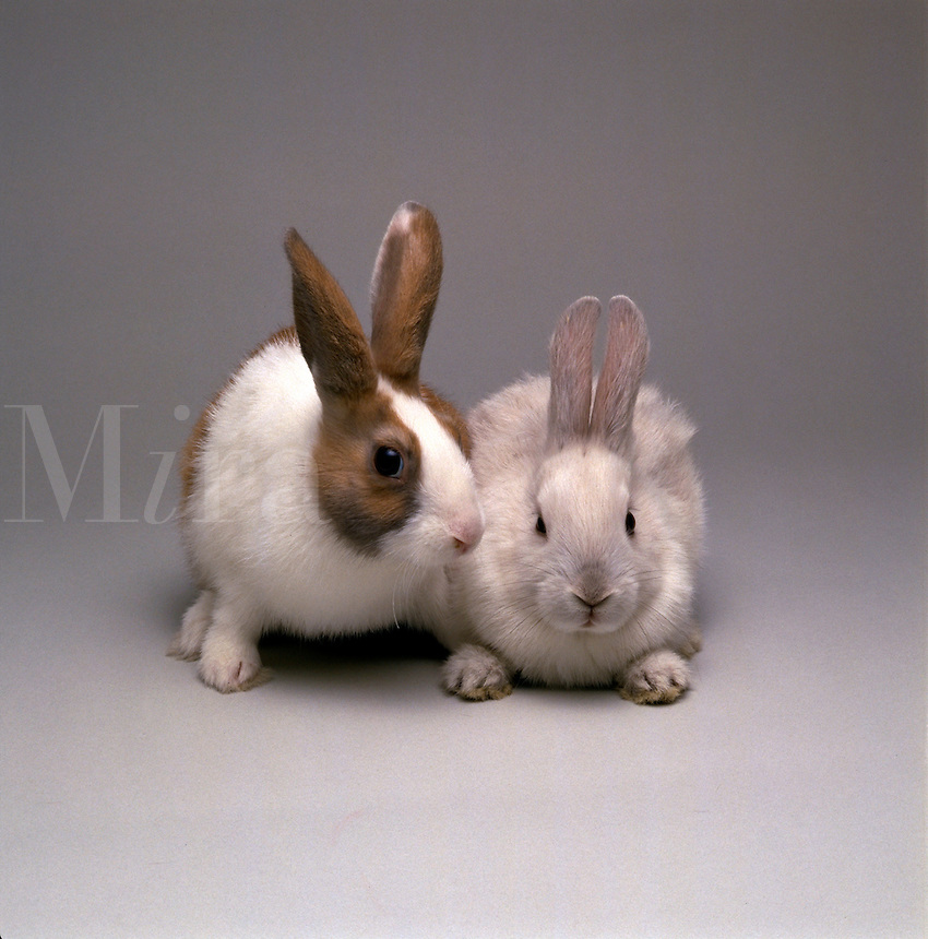Portrait of rabbits