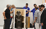 Egyptian workers transport statues upon its arrival at the restoration laboratory of the Grand Egyptian Museum (GEM) in Cairo, Egypt, on Sept. 20, 2017. A batch of statues were transported from the Egyptian Museum to the GEM on Wednesday. The GEM is still under construction and scheduled to be opened in 2018. Photo by Amr Sayed