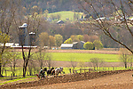 Nippenose Valley, PA. Amish four horse team plowing in Spring.