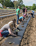 People working on a farm