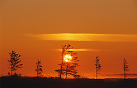 sunrise and sparesely treed tundra<br /> Churchill<br /> Manitoba<br /> Canada