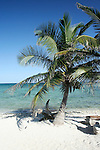 Lone palm tree on beach at Mexican resort