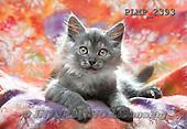 Marek, ANIMALS, REALISTISCHE TIERE, ANIMALES REALISTICOS, cats, photos+++++,PLMP2393,#a#