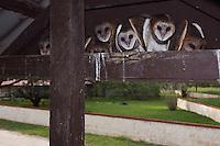 Barn Owl, Tyto alba, young in nest, Willacy County, Rio Grande Valley, Texas, USA, May 2007