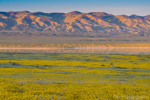 Sunset at Soda Lake in the Carrizo Plain National Monument with field of yellow wildflowers