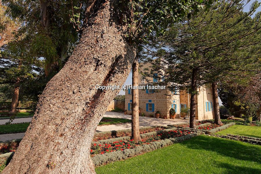 Israe, the Galilee. Carob tree in the Bahai Garden near Nahariya