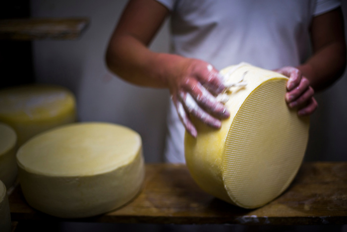 Cleaning cheese while it matures at the cheese factory at Hacienda Zuleta, Imbabura, Ecuador, South America