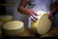 Cleaning cheese while it matures at the cheese factory at Hacienda Zuleta, Imbabura, Ecuador, South America