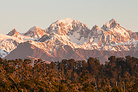 View of Mt. Tasman and Aoraki Mt. Cook from Three Mile Beach across native forest during sunset, Westland Tai Poutini National Park, UNESCO World Heritage Area, West Coast, New Zealand, NZ