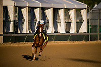 LOUISVILLE, KY - MAY 01: Good Magic gallops in preparation for the Kentucky Derby at Churchill Downs on May 1, 2018 in Louisville, Kentucky. (Photo by Alex Evers/Eclipse Sportswire/Getty Images)