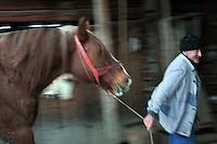 RUMAENIEN, 02.2006, Cirta bei/close to Miercurea-Ciuc. Pferdehaltung auf dem Dorf. Pferde werden bis heute als Nutz- und Zugtiere eingesetzt. | Village horsekeeping. Horses are until today used as productive livestock for work and cart-pulling..© Andreea Tanase/EST&OST.