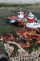 Europe/France/Basse-Normandie/50/Manche/Cap de la Hague/Goury: Retour de la pêche - Détail d'un panier de crustacés sur le port ,homard ,crabe et araignée de mer