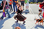 Harvest Festival, Oakley, California, October 19, 2013