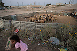 ISRAEL Wadi el-Na'am, Negev desert<br />